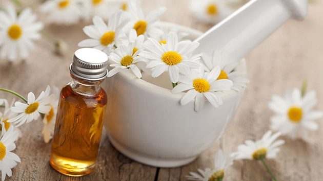 tinh dầu hoa cúc